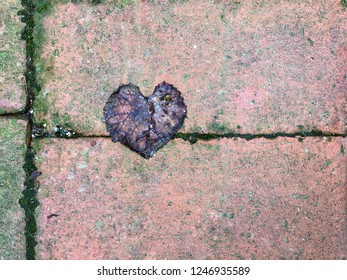 heart shaped dried leaf on ground