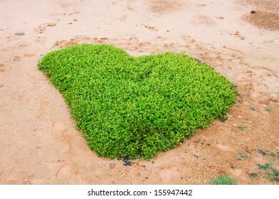 Heart shaped green grass