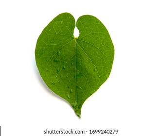 heart shaped green leaf, Close up green grape leave isolate on white background