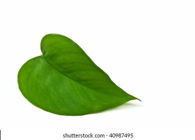 Heart shaped green leaf isolated on white background