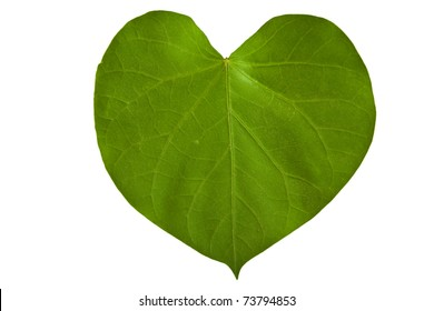 A heart shaped green leaf, symbolizing love for the environment
