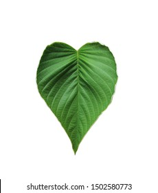 Heart shaped green leaves isolated on white background