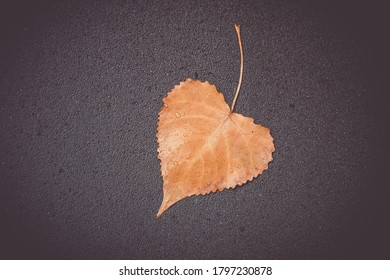 heart shaped leaf in autumn