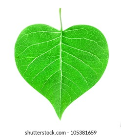 heart shaped leaf isolated on white