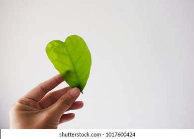 Heart shaped leaves in the left hand