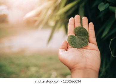 Heart shaped leaves on the palm.