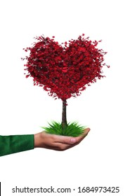 Heart shaped maple tree on a hand