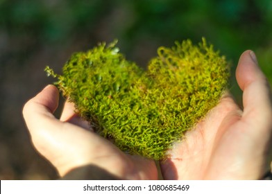 heart shaped moss in hand, sunny day in the forest