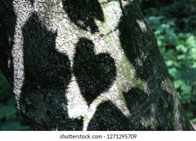 Heart shaped shadow on tree bark to remind you to love others, plus shadow to left kind of looks like gorilla looking at heart.