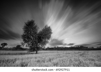 Heart shaped single tree in black and white landscape