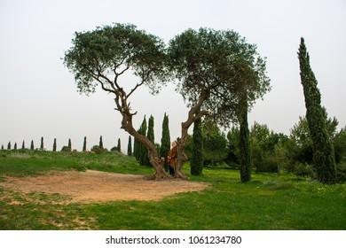 a heart shaped tree