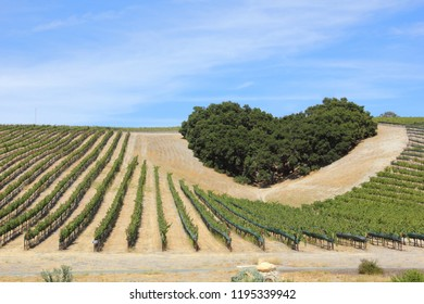Heart Shaped Trees Above the Grapevines
