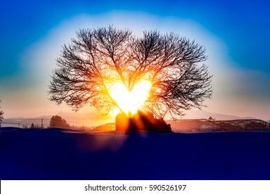 The heart of sun