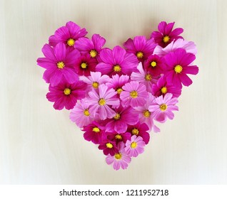 Heart symbol made of blooming cosmos flowers. Love concept, Valentine's day