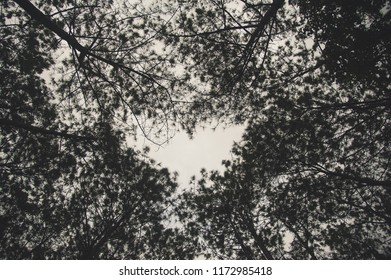 The heart top tree.