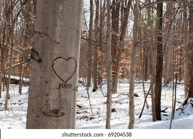 A heart and the word forever carved on a tree trunk in a winter woods.