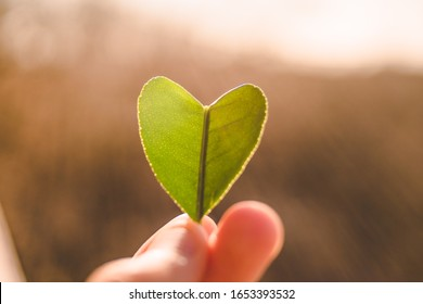Hearth symbol shape tree leaf hold in hand. Love concept, nature connection. Green tree leaf at sunlight, clorofilla