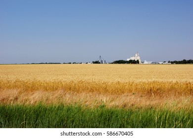 Heartland bounty. A wheat field in Kansas near a small town with a large grain elevator in the distance.