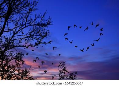 Heart-shaped bird flight in the sunset