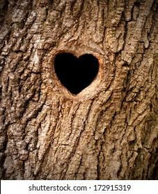 Heart-shaped bird nest in hollow tree trunk