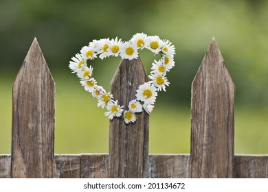 a heart-shaped daisy chain on a picket fence in the garden