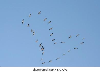 A heart-shaped flock birds flyin in the sky