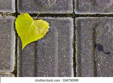 Heart-Shaped Leaf on a Sidewalk