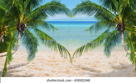 Heart-shaped leaves of the coconut on a beach.