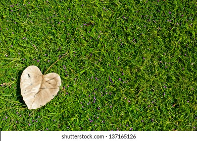 heart-shaped leaves on green grass