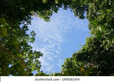 Heart-shaped Sky in a Tropical Forest