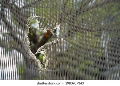 The heart-shaped tear notch on the tough mesh sheet that has beautiful outer environment. It is like being independent, breaking out of the framework, limitations or rules to a bright and wide world.