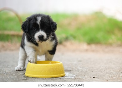 Heat stroke in baby dog.Black and white dog drinking water in yellow bowl on concrete road.
