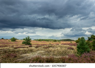 Lüneburg Heath is a large area of heath, geest, and woodland Not fahr from Lüneburg in northern Germany.