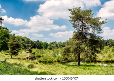 Heather, Forest and Water in a Protected area