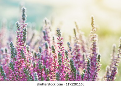 Heather frozen flowers. Bright natural cyan and yellow background