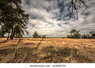 Heather landscape with blue and cloudy sky on a sunny winters day