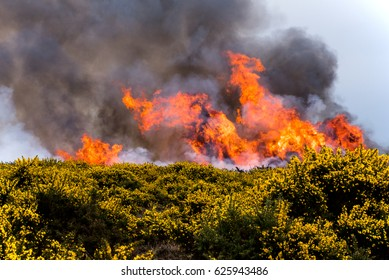 Heathland fire with gorse in front and black smoke