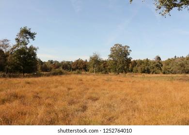 Heathland near Heeze in North Brabant in Holland