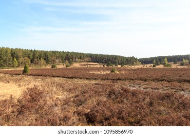 Heathland panorama and trees in Luneburg Heath near Undeloh and Wilsede, Germany