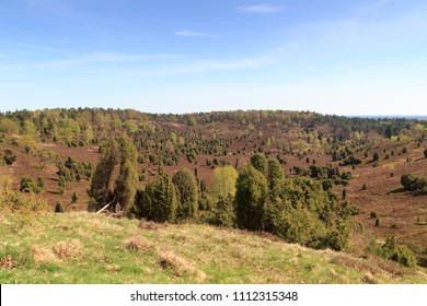 Heathland panorama view to basin Totengrund in Luneburg Heath near Wilsede, Germany