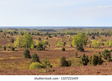 Heathland panorama view from hill Wilseder Berg in Luneburg Heath near Undeloh, Germany