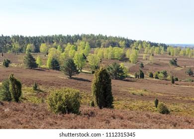 Heathland panorama view from hill Wilseder Berg in Luneburg Heath near Undeloh, Germany