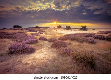 Heathland and shifting sands in national park de Hoge Veluwe around sunset under a clouded sky in August. Vintage retro look.