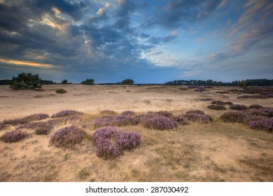 Heathland and shifting sands in national park de Hoge Veluwe near Arnhem  around sunset under a clouded sky in August