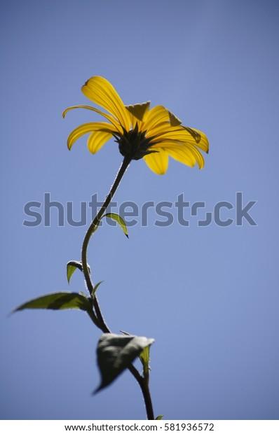 heavenly flower