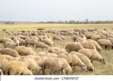Heavily blurred blurry background. Flock of sheep grazes in nature. Countryside, agriculture. Natural rustic background. Beautiful animals graze in pasture