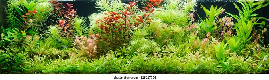Heavily planted large freshwater aquarium