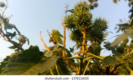 HEAVY CACTUS LIKE FLOWERS AND GREEN PETALS WITH DAYLIGHT SUNLIGHT BLUE SKY BLURRY BACKGROUND  GREEN PLANTS PHOTOSYNTHESIS FOOD STEMS XYLEM PHLOEM LEAVES PINES CIRCLE IN BETWEEN - HIGH QUALITY IMAGE