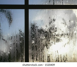 Heavy condensation on window pane shot from inside to outside. The mullions on the window form a cross at the top of the image, slightly off center to the left. Palm trees are evident outside