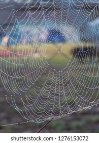 Heavy dew on a spiders web